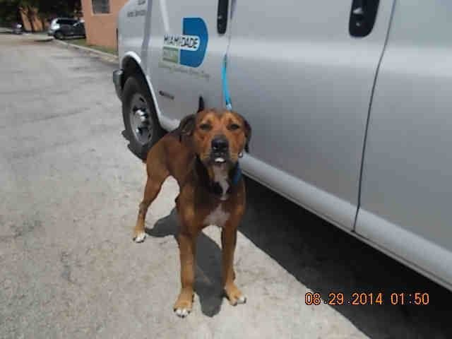 Dogs In Tallahassee Rescues