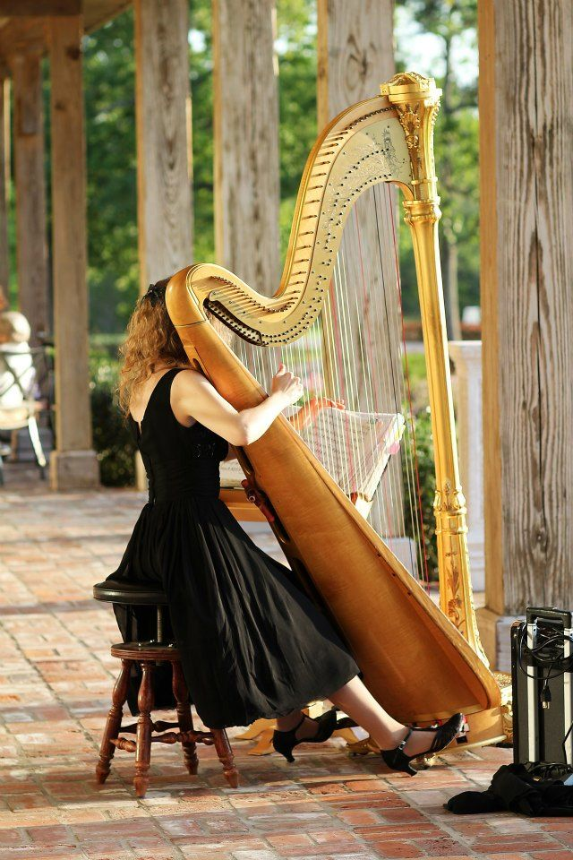 Harp welcoming my guest with lovely music.