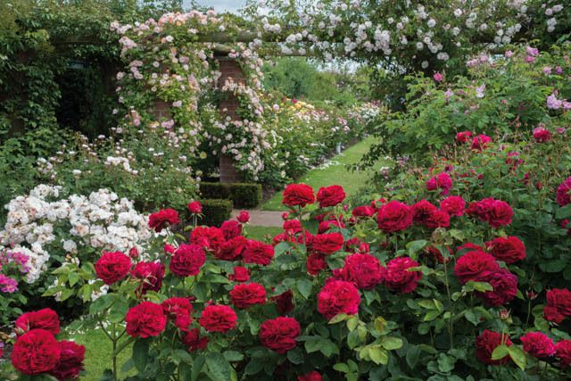 1000 Images About Rose Garden On Pinterest Gardens