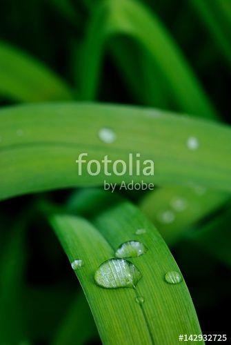 Gocce di pioggia su una foglia