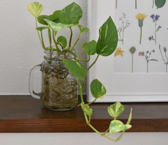 高いところから吊り下げて 吊るして育てたい観葉植物10選 Lovegreen ラブグリーン 観葉植物 鉢植え 室内 観葉植物
