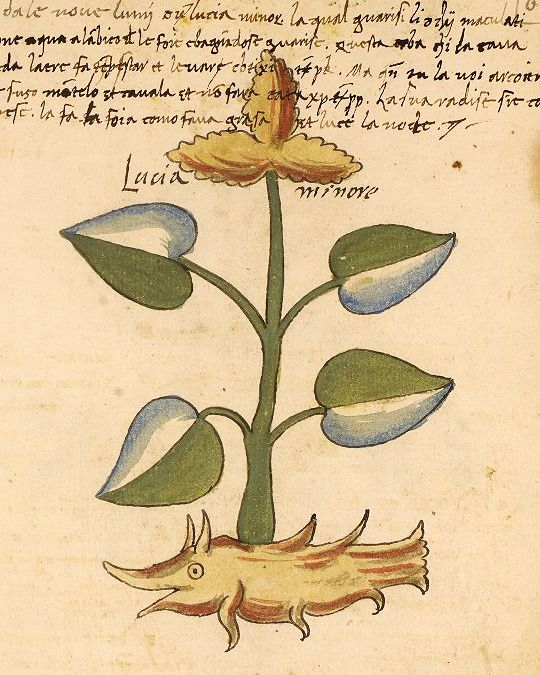 Who's a happy little root system? You are!  Manuscript description and digital images can be found here at OPenn, and you can download an ebook version here.  Fol. 68r, LJS 419  Title: Erbario [manuscript].  Origin: [Italy, 14–]