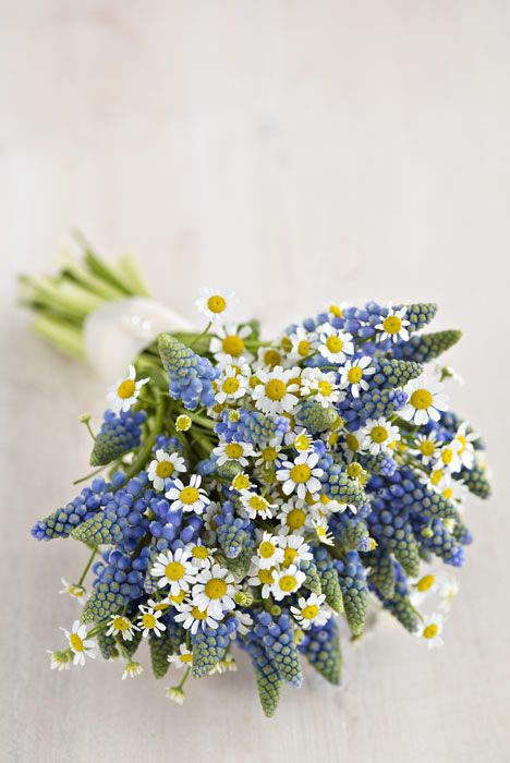 Bridesmaids bouquet daisy & muscari Wild About Flowers