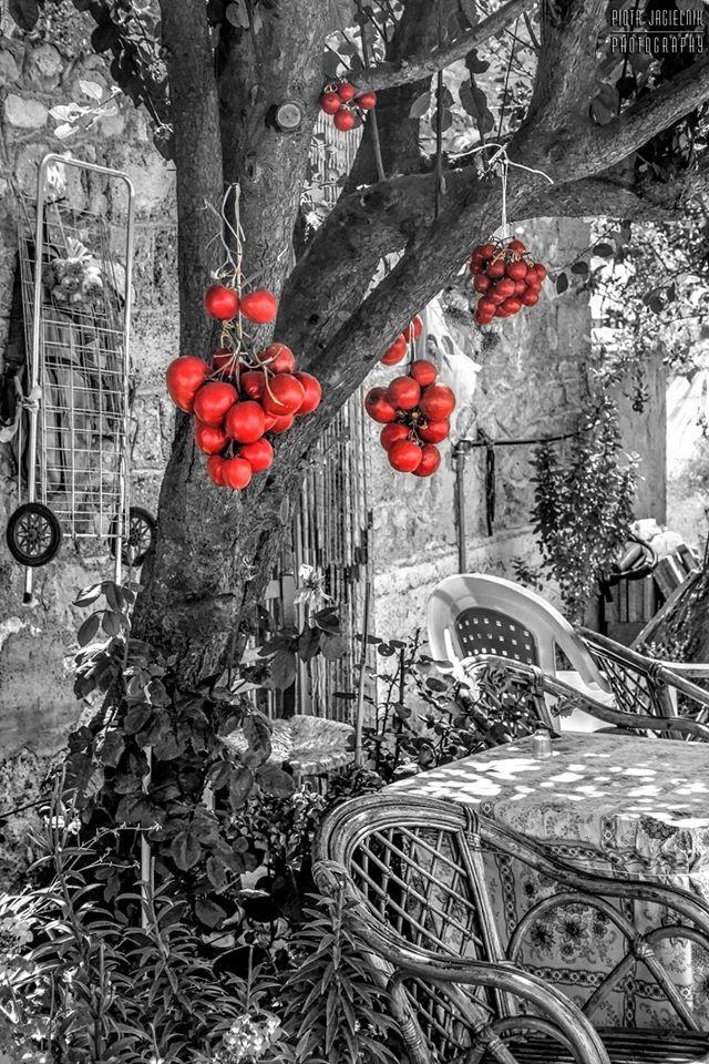 Σπιτικές #Λιαστές #Ντομάτες | Homemade #Sun #Dried #Tomatoes || #Ierapetra #Ιεράπετρα #Κρήτη #Crete #CretanCuisine #CretanDiet #CretanGastronomy #CretanFood ||