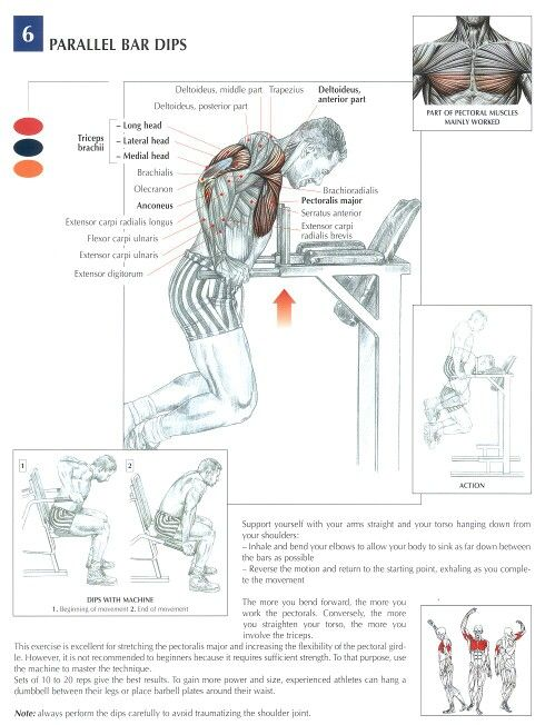 Parallel bar dips - chest and arms excersise  #chest #arm #muscles