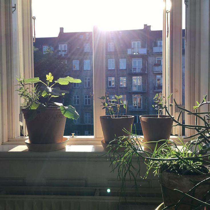 Summer in the city  #urbangardening #urbanfarm #urbangardencompany