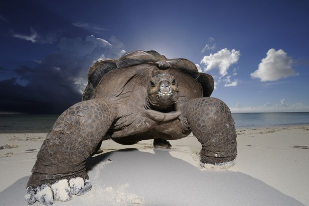 Lonesome George?