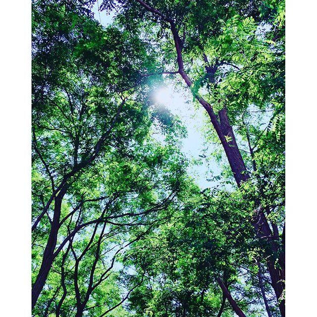 【m.shunbo】さんのInstagramの写真をピンしています。《暑いのうれしい #お墓参り#墓参り#お盆#林#木#木々#太陽#お日さま#sun#空#そら#ソラ#スカイ#sky##夏#サマーsummer#真夏日#青#ブルー#blue#緑#グリーン#green》
