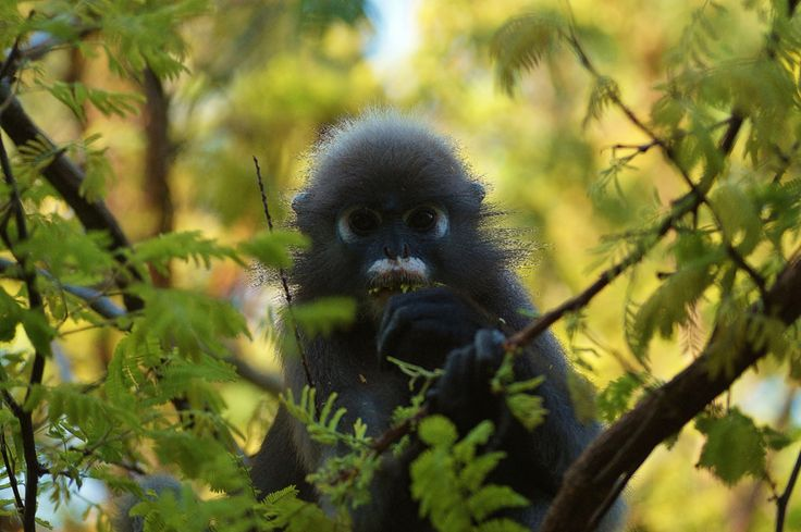 Monkeys' in The trees
