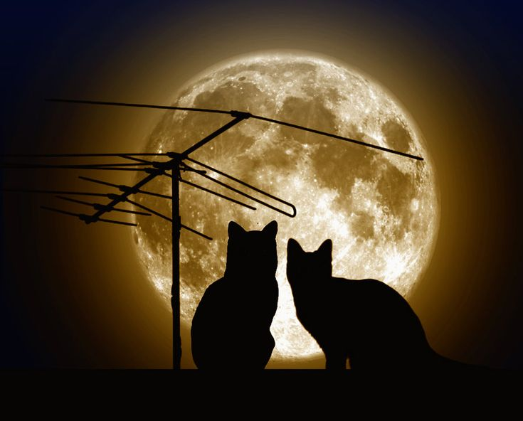 Cats and moon