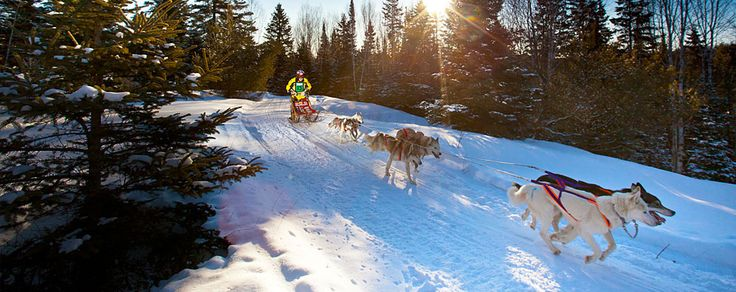 Join us on the 2nd weekend in February annually the Ontario's Largest Dog Sled Races in Kearney, Ontario. www.kearneydogsledraces.ca
