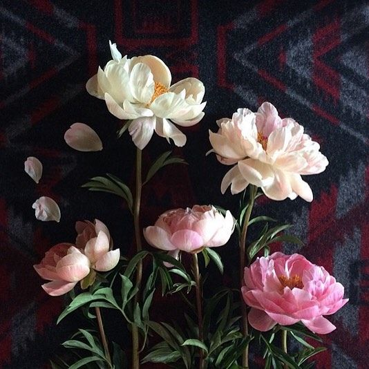 a personal favorite ... #tbt from my early spring peony obsession  #FreshHues #SlowLiving #ModernFolk #nothingisordinary #livesimple