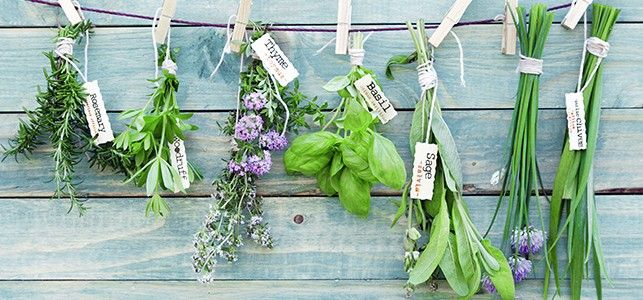 Gardening RX: How to Grow 5 Ayurvedic Herbs