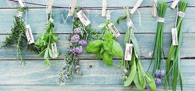 Gardening RX: How to Grow 5 Ayurvedic Herbs