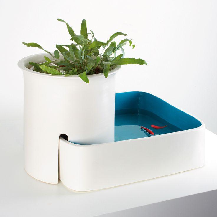 1000 ideas about indoor pond on pinterest koi fish pond for Indoor koi aquarium