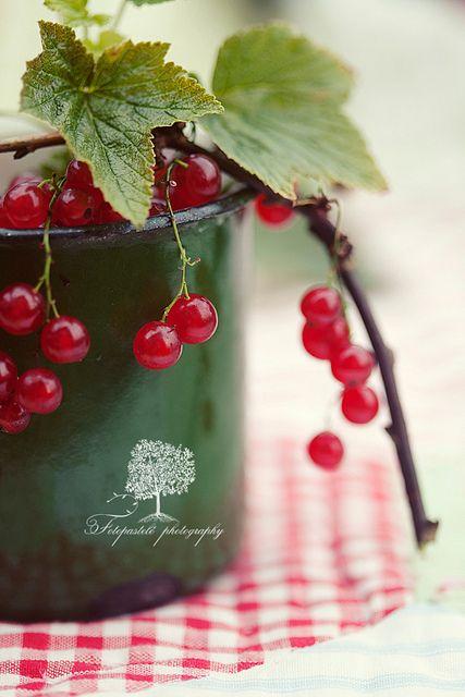 Redcurrant by loretoidas, via Flickr