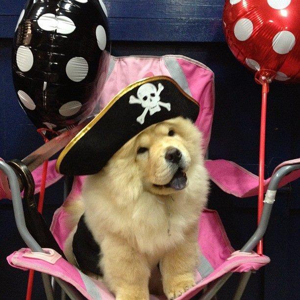 Beautiful Korea Chubby Adorable Dog - fb6060bd11f0b45c1dc43d2e51dcca88--pirate-wonders  Picture_352958  .jpg