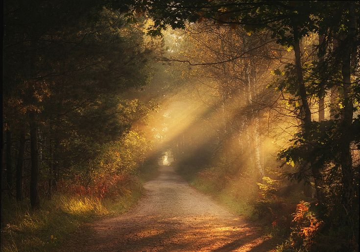 Magic road | Pawel Uchorczak