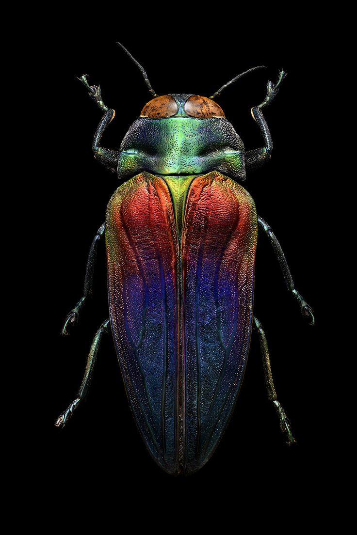 64 besten Critters Bilder auf Pinterest   Aquarellmalerei, Bienen ...