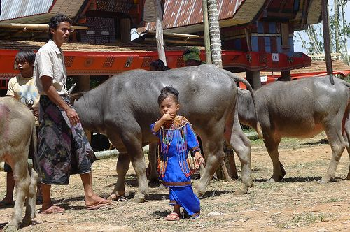 Indonesia, Sulawesi, Tana Toraja