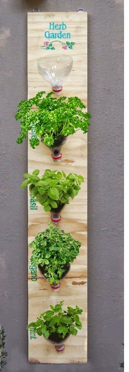 Como criar em sua casa ou apartamento uma pequena horta de temperos