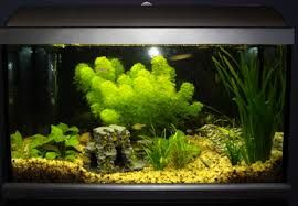 AQUARIUM SUPPLIES, ACCESSORIES AND EQUIPMENT: Simple Tips to Basic Aquarium Maintenance