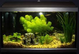 AQUARIUM SUPPLIES, ACCESSORIES AND EQUIPMENT: Simple Tips to Basic Aquarium Maintenance