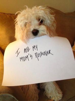 "Dentaltown - Dog: ""I ate my mom's retainer?"" What is the craziest excuse you have heard before for a damaged retainer?    http://www.dentaltown.com/MessageBoard/thread.aspx?s=2&f=135&t=236807&v=1"