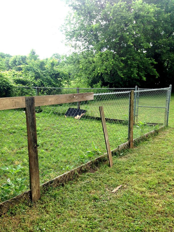 Upgrading A Chain Link Fence Fence Landscaping Backyard