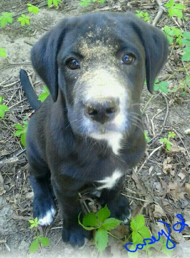 I love my lab mix! I took this picture of him trying to dig when he was around 3 months old lol. JAY J is now over a year old and honestly the best lil buddy I could ask for. Such a great dog! #blessing