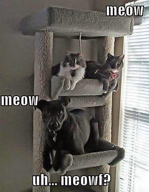 Funny Dog Cat Meowf