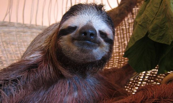 Are You Ready to Meet the Sloths?