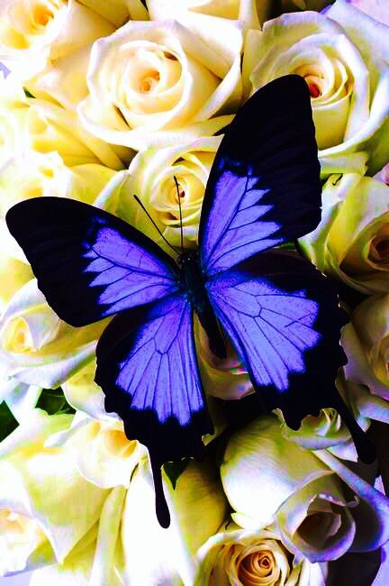 Here is my finished edit of the butterfly pic