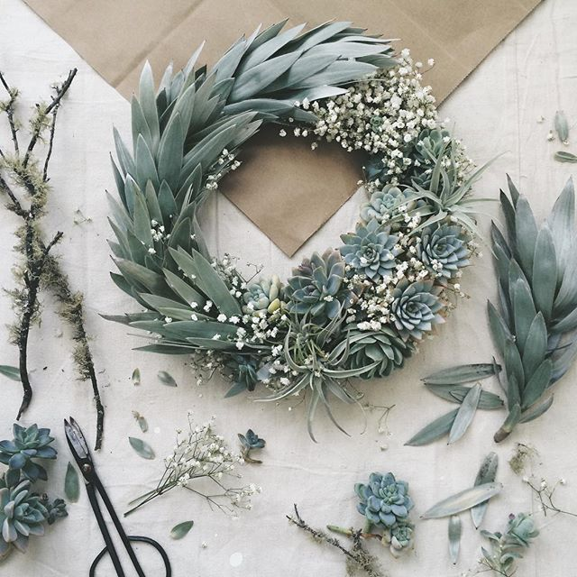 Wreath three: The handsomest arboreal member of the Proteaceae family of great antiquity: Leucadendron argenteum; Echeveria, Tillandsia, Graptopetalum, Sedum, Gypsophila.  special mentions to @wigglestemgardens and @ampersand_sf for assistance with material acquisition!