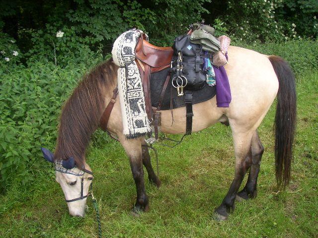 welche Satteldecke? Selbernähen? - Wanderreiten, Urlaub mit Pferden, Reiterferien... - Pferdeforum