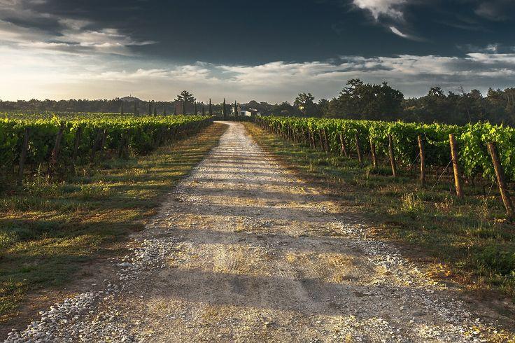 Der perfekte Ort für Hochzeiten im Sommer:  die Toskana