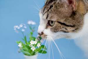 Best 25 Toxic Plants For Cats Ideas On Pinterest Plants