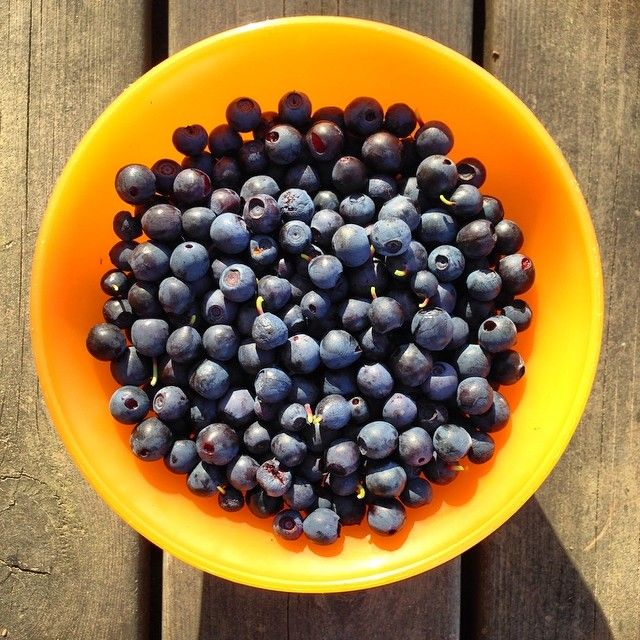 Experience the pure Finnish countryside in late summer - go and pick your own wild blueberries in any forest you'll like - delicious and fun!