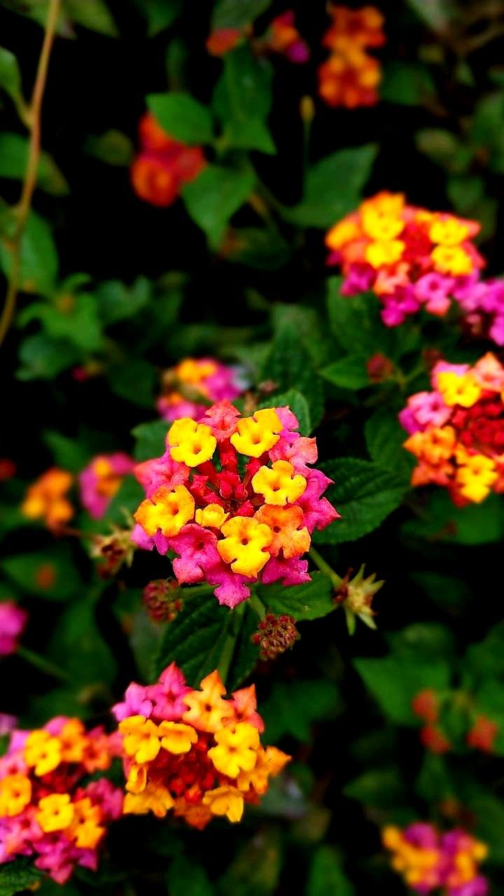 Pin by john patrick on my board pinterest flowers plants and