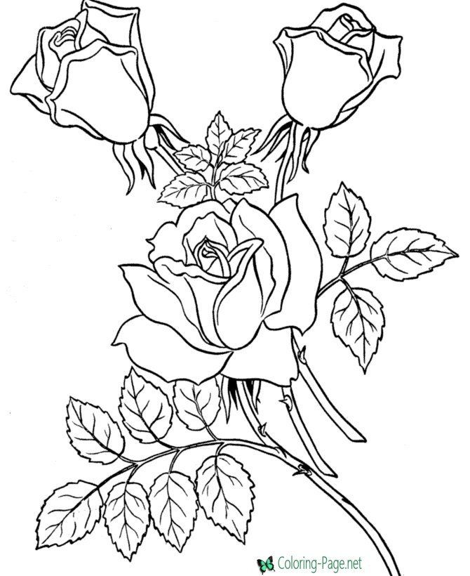 Rose Flower Coloring Pages Flower Coloring Pages In 2020 Rose Coloring Pages Flower Coloring Pages Skull Coloring Pages