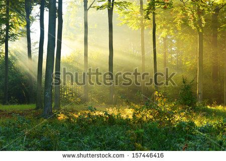 Fantasy Forest Background Stock Photography | Shutterstock