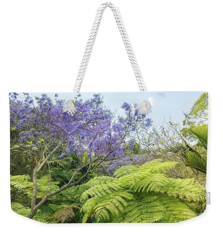 "Weekender Tote Bag featuring the photograph Blooming Jacaranda Tree by Evgeniya Lystsova. Landscape of Tropical Trees and blooming Jacaranda Tree in San Diego, California. Our Weekender Tote Bags are chic and perfect for a day out on the town, a staycation, or a weekend getaway. The tote is crafted with soft, spun poly-poplin fabric and features double-stitched seams for added durability. The 1"" thick cotton handles are perfect for carrying the bag by hand or over your shoulder."