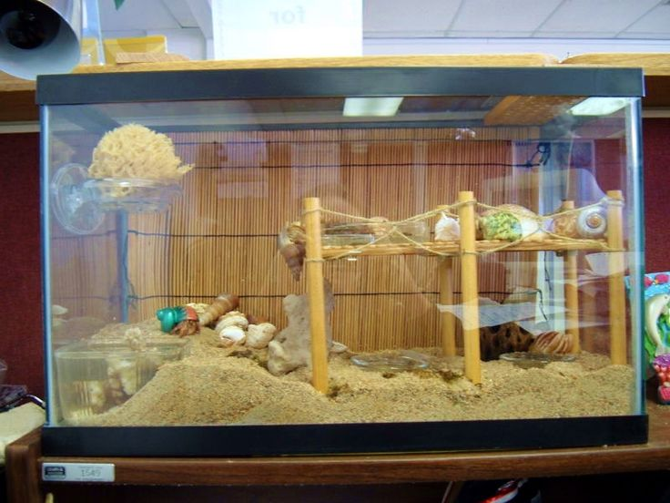 DIY Hermit Crab Boardwalk @Brooke Williams Smith this is the only way i will let your kids get hermit crabs... some awesome cage like this haha