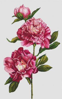 Cross stitch pattern Peonies needlepoint flowers by LaMariaCha