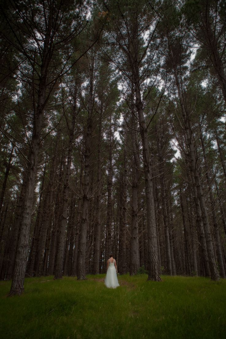 Magnificent Pines for that touch of drama at Whangaihe bay wedding with Susi Liddington Creative. www.susiliddington.com www.jennayoungphotography.co.nz