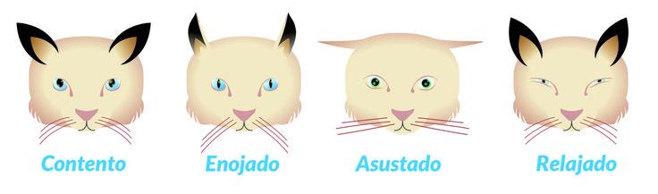 """""""Gracias a la domesticación por parte del ser humano, los gatos han desarrollado una forma de comunicación que les permite interactuar en grupo, tanto con nosotros como con perros y gatos con los que conviven.  Básicamente, el lenguaje felino se compone de expresión facial, expresión postural y expresión vocal. Veamos los ejemplos más característicos:""""  http://blog.hvcruzcubierta.com/quieres-saber-que-te-dice-tu-gato/"""
