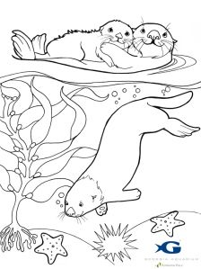 Sea otter coloring page. Contest for best art put in the yearbook