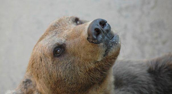 Права Животных — дело каждого из нас. // Защита прав животных в России