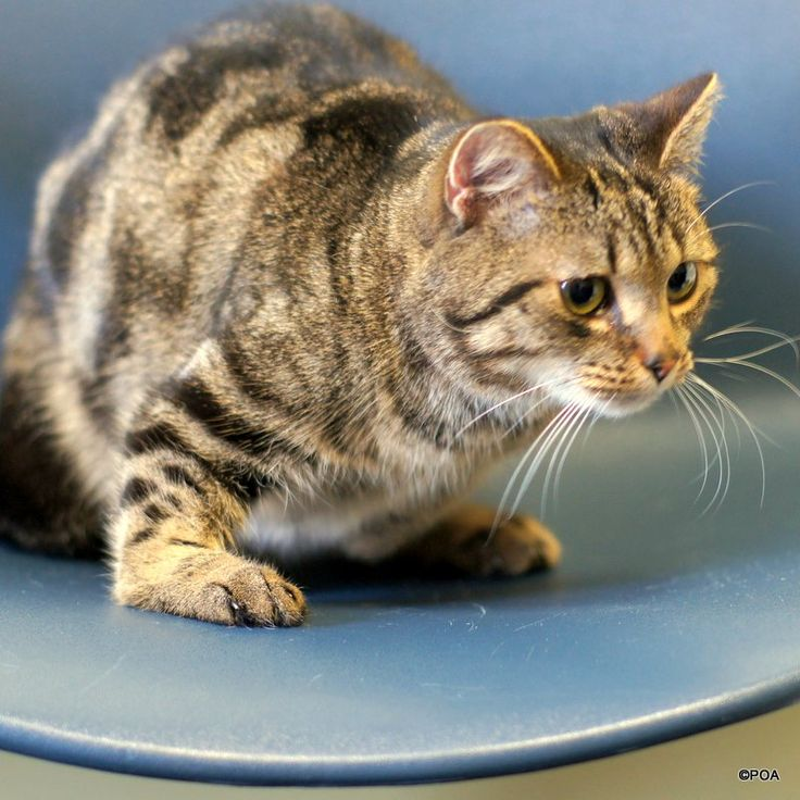 Adoptable Cats at the Protectors of Animals Animal Rescue