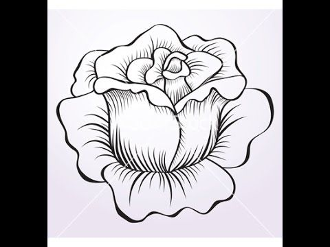 Best 25 Flower drawing tutorials ideas on Pinterest Flowers to